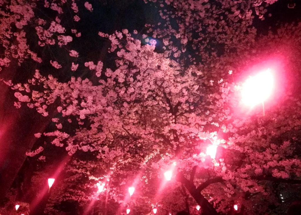 桜モチーフのピンキーリングとペンダント。